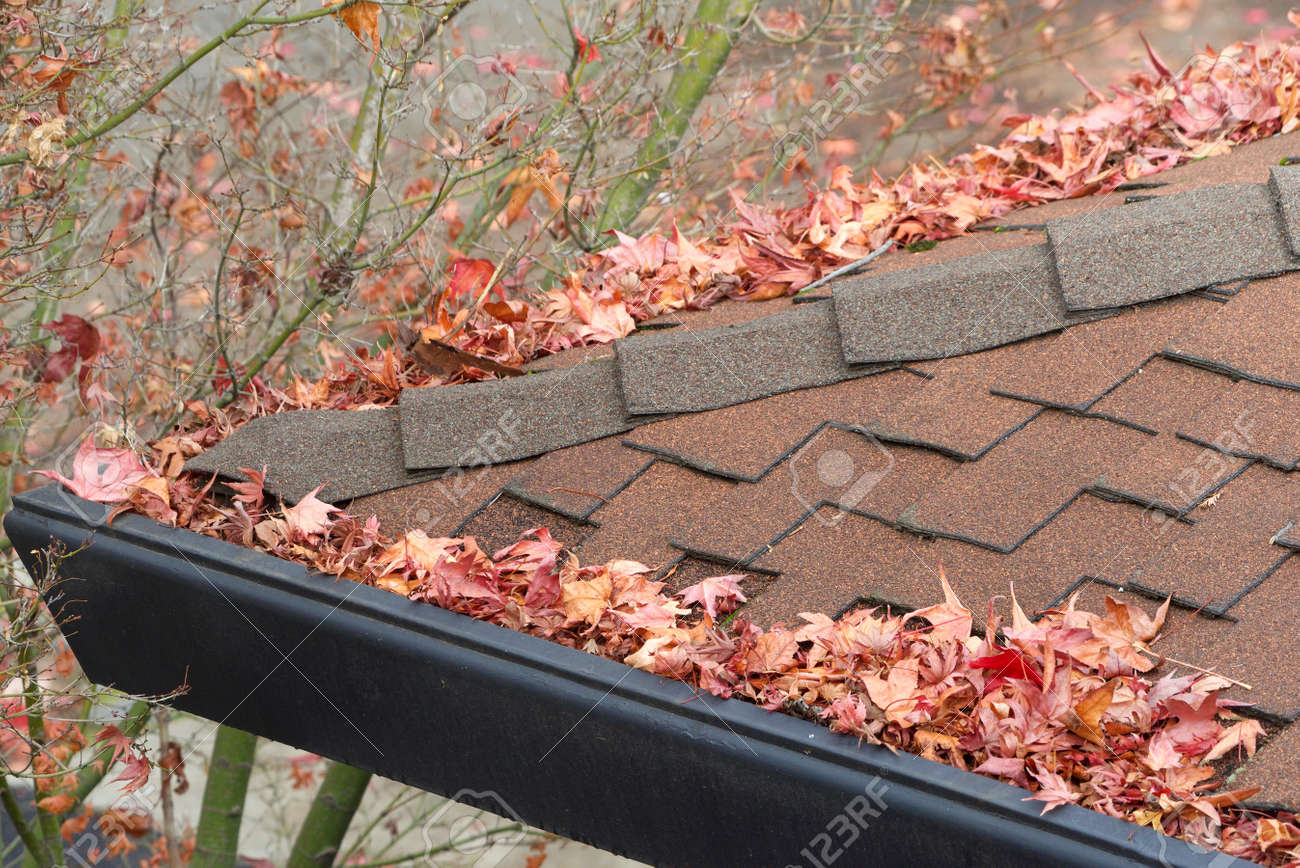 Rain gutters on roof without gutter guards, clogged with leaves,