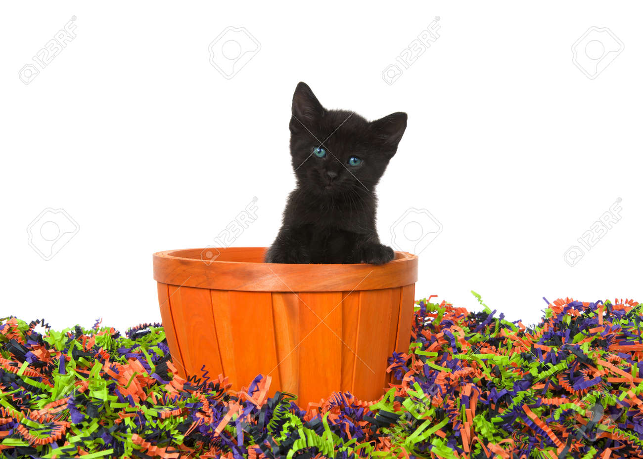 Adorable Black Kitten With Bright Blue Green Eyes Sitting In Stock Photo Picture And Royalty Free Image Image 124622966