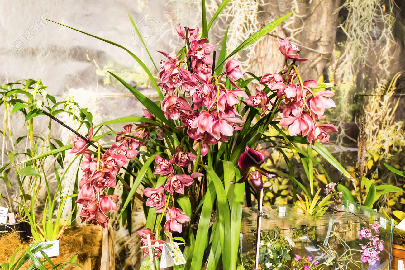 Tropical Orchid Is One Of The Most Beautiful Flowers On Earth