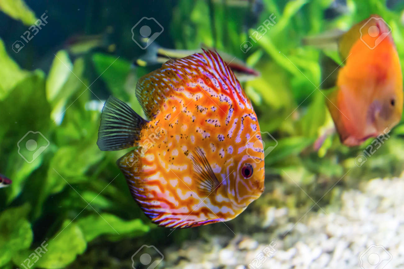 Tropical Freshwater Fish Photos - The Best Fish 2018