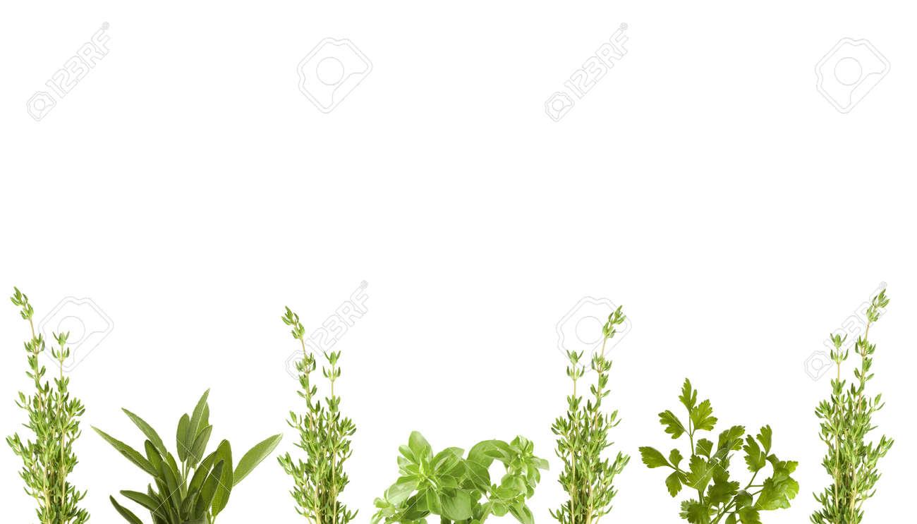 fresh herbs for border Stock Photo - 4487285
