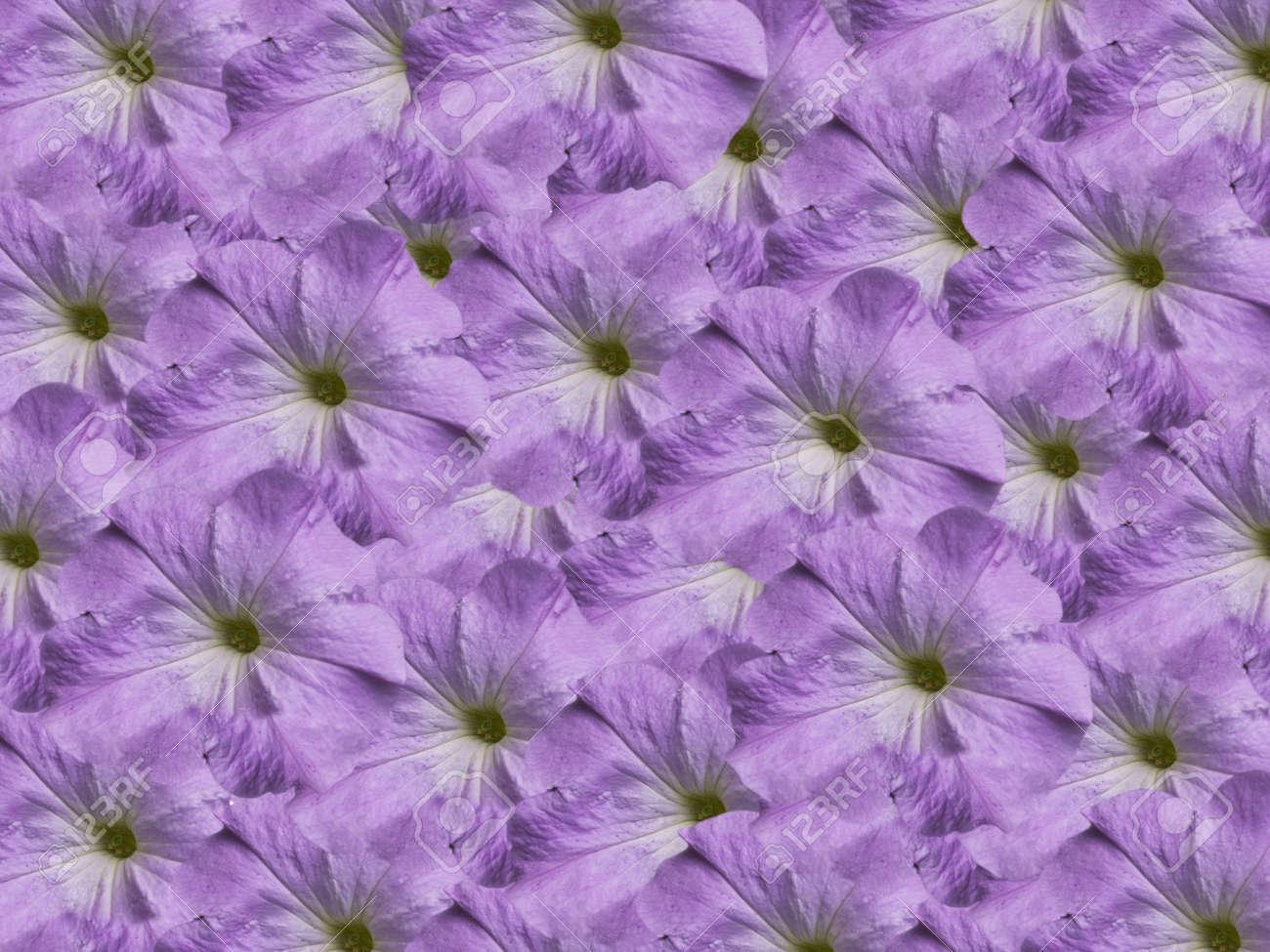Purple Floral Wallpaper Petunia Backdrop Stock Photo