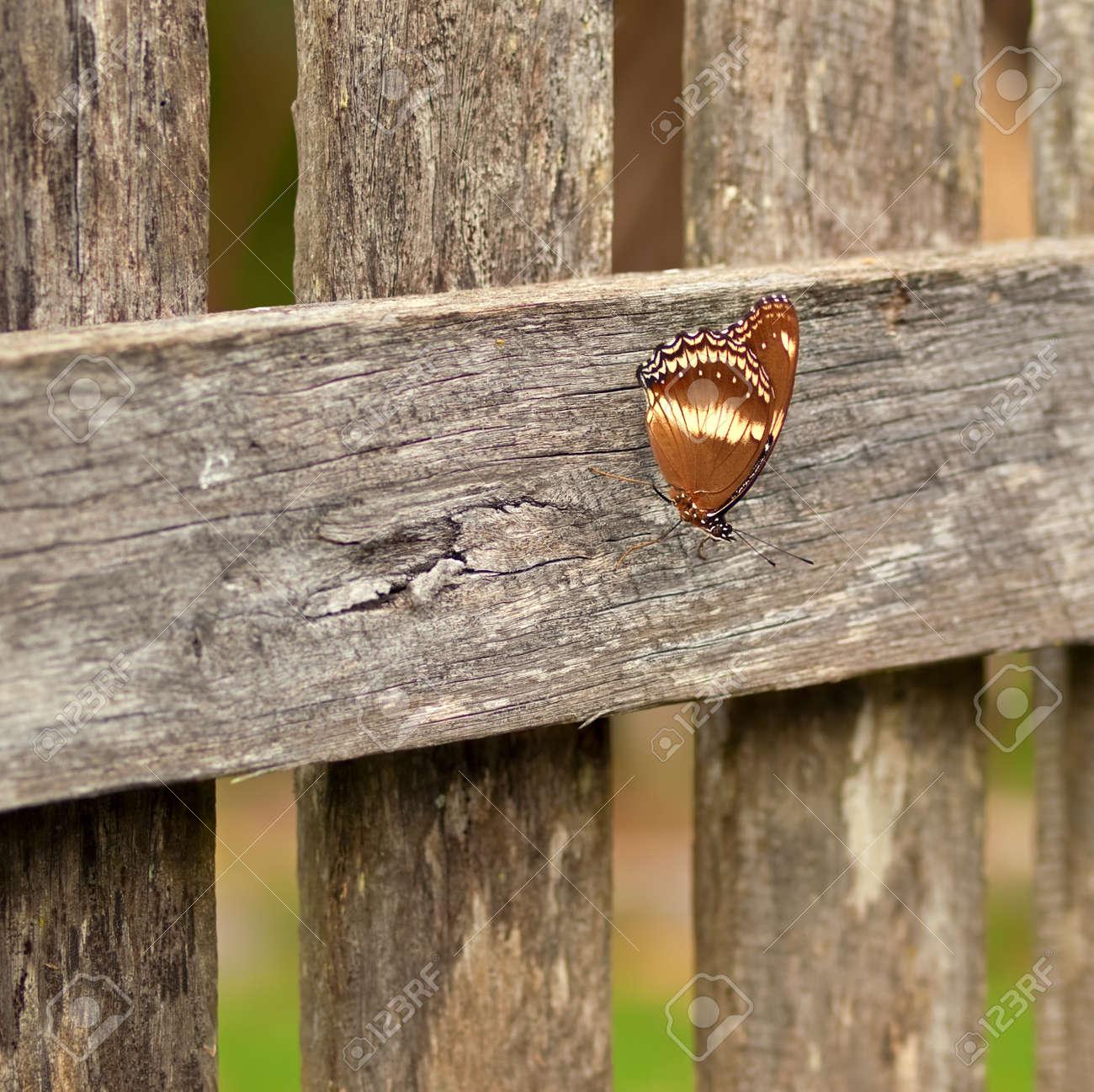 Autumn Day Australian Schmetterling Ruht Auf Altem Holz Lattenzaun