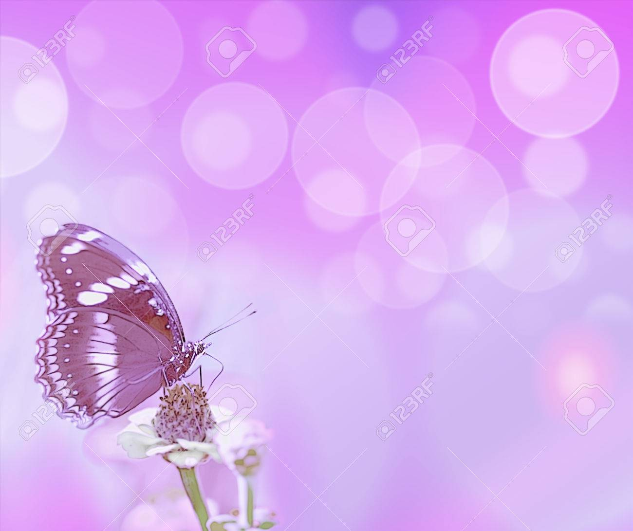 Abstract Purple Bubbles And Butterfly Card Background Symbols