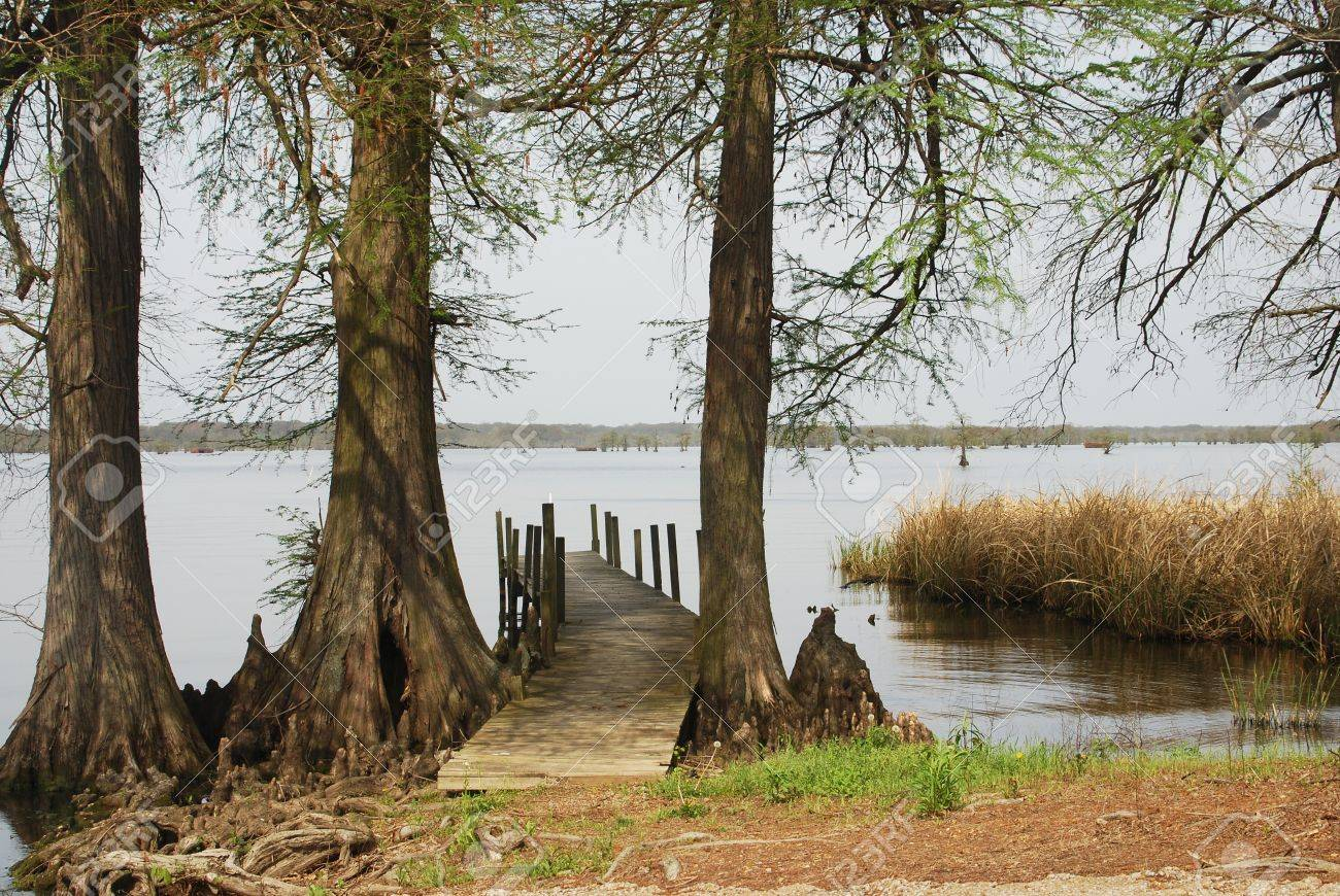 An old fishing pier is flanked by cypress trees at Reelfoot Lake