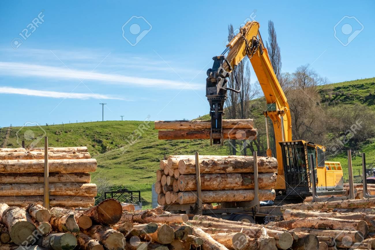 Logging machines load up a truck with logs at a forestry site - 111575354