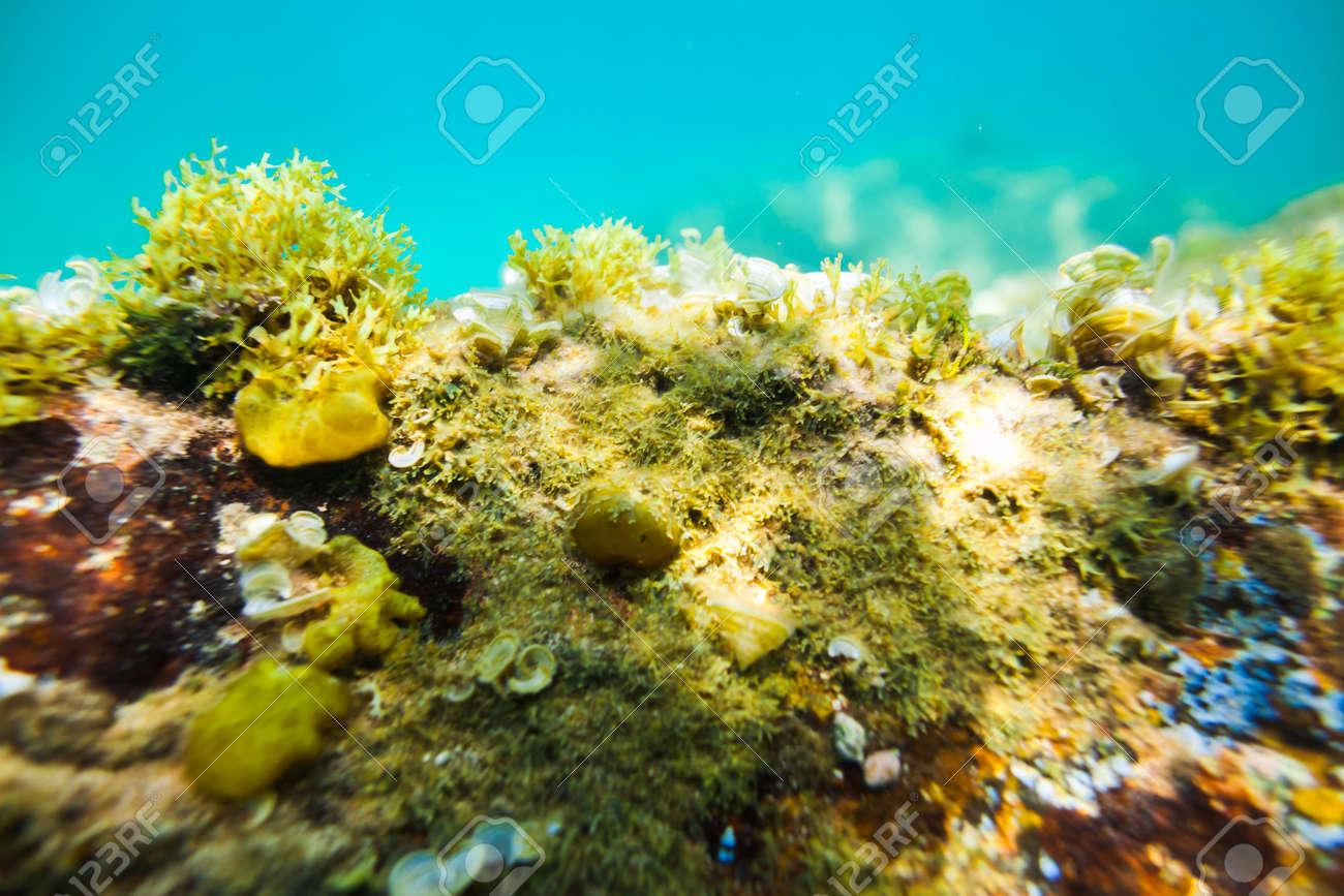 Stock Photo underwater sea rocks bottom