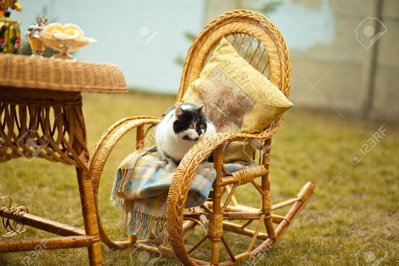 Chat Sur Chaise à Bascule à Lextérieur Mobilier En Osier En Pique
