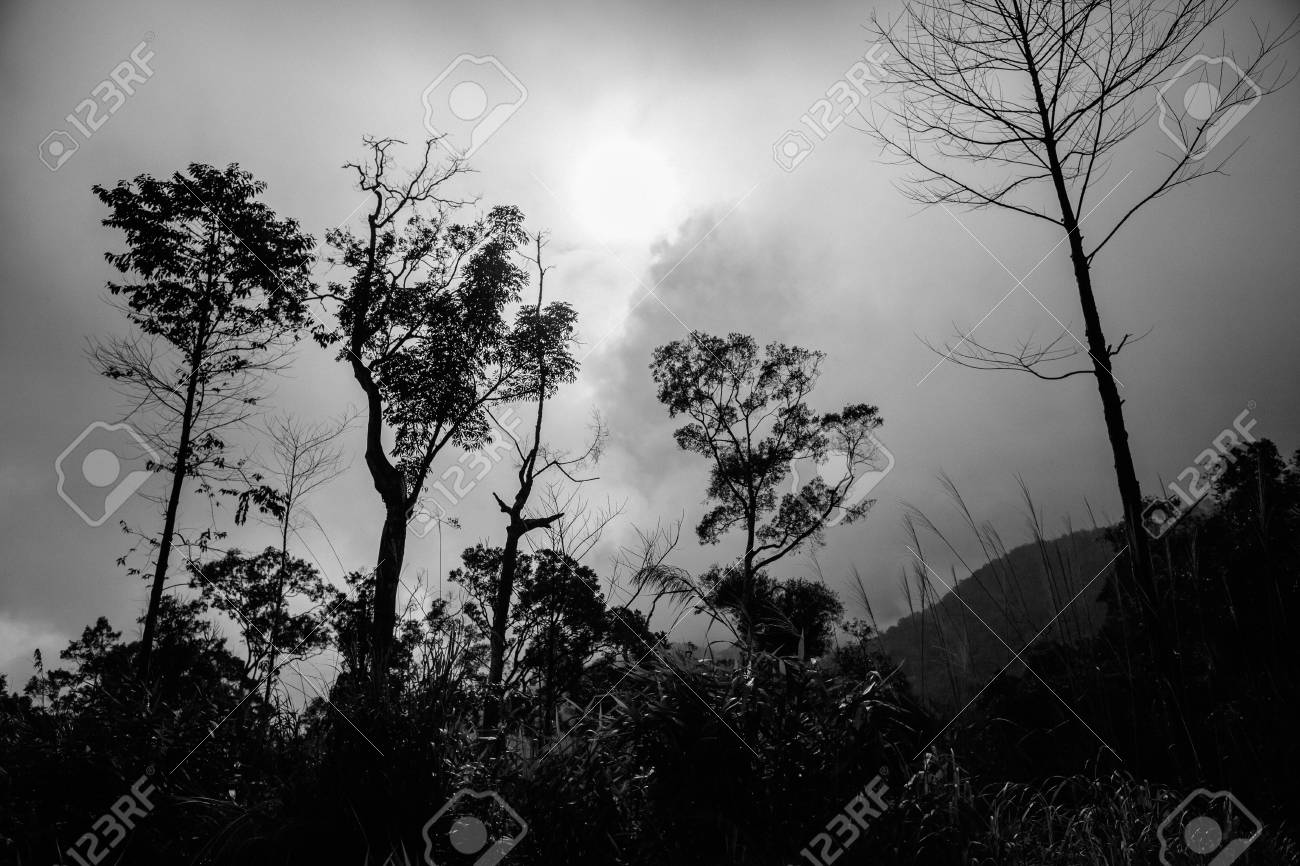 Mystical forest trees in black and white jungle forest stock photo 76007790