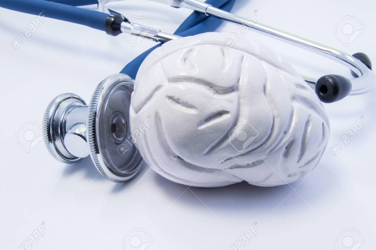 Anatomisches 3D-Modell Des Menschlichen Gehirns Als Organ In Der ...