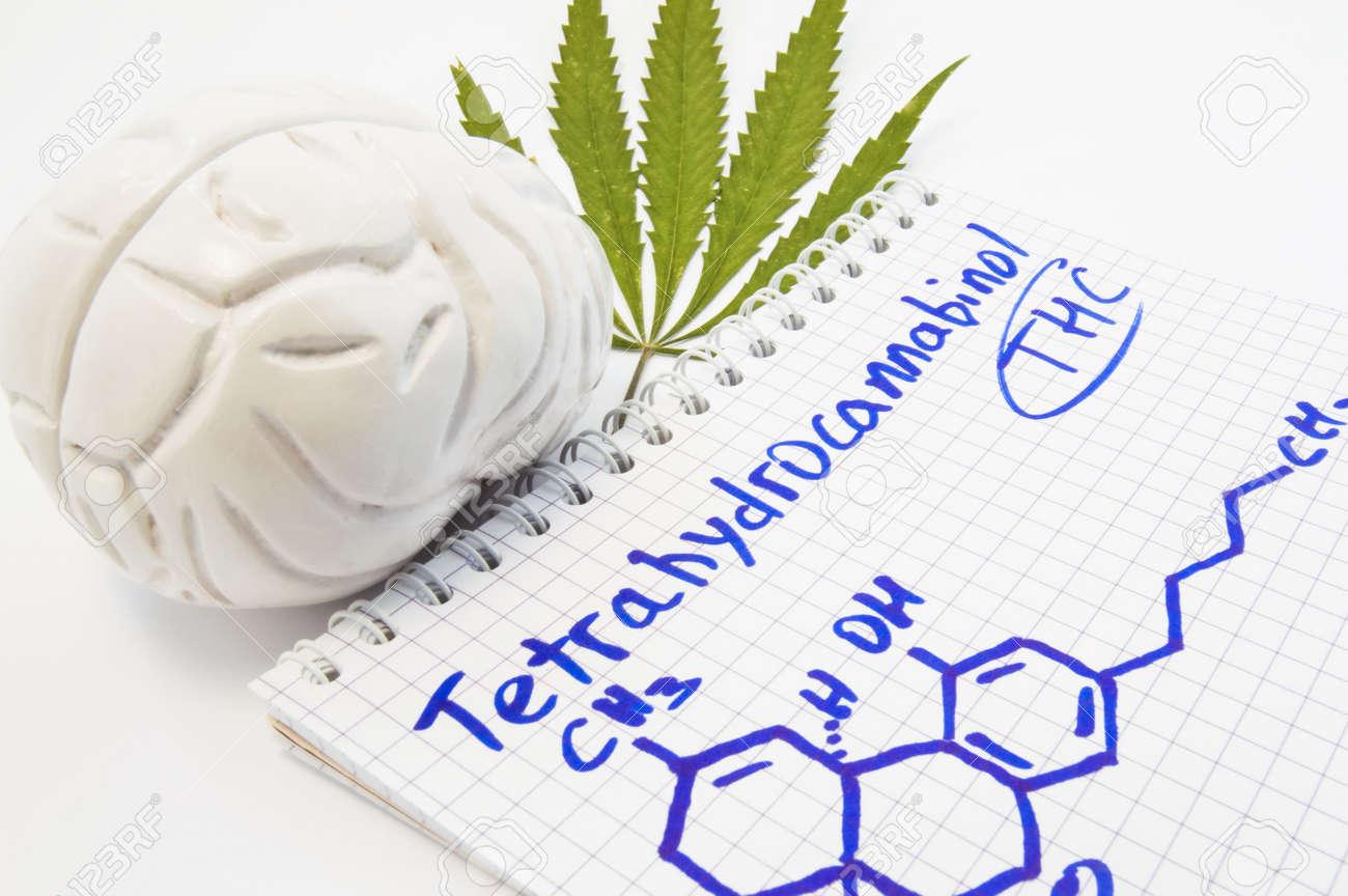 Effects And Action Of Tetrahydrocannabinol Thc On Human Brain
