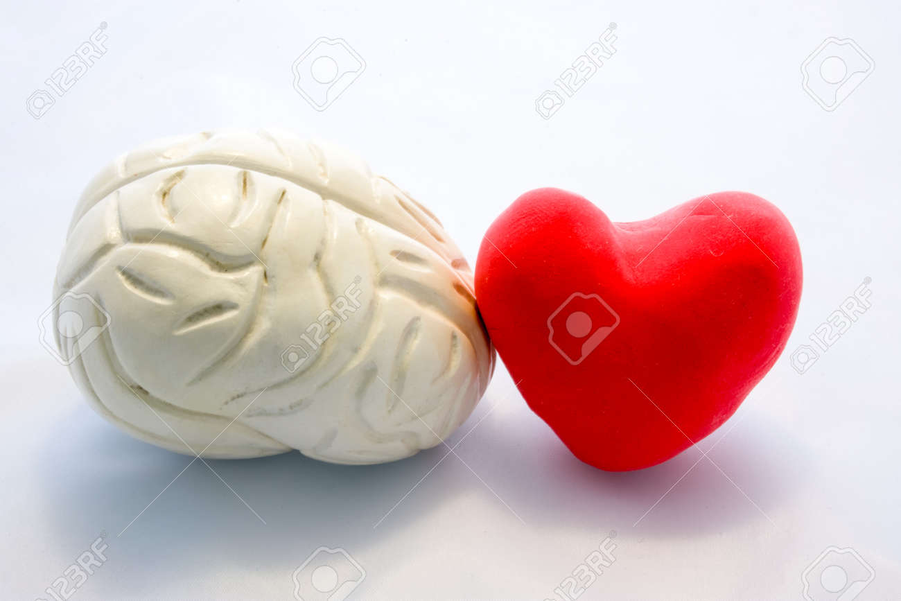 Red card heart shape and figure of human brain standing next to next to each other on white background. Connection heart and brain in couple or choice for who to follow, or their interaction in body - 113435709