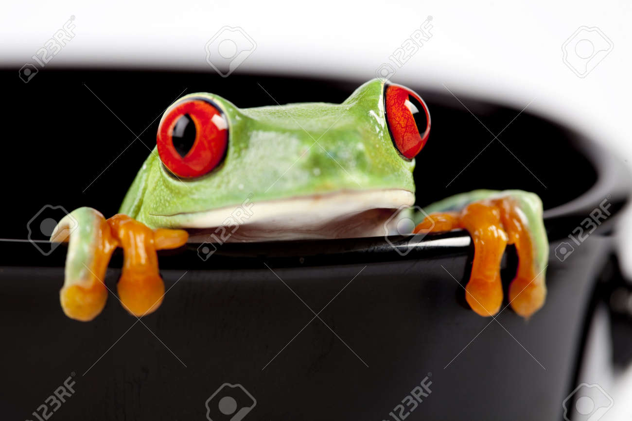 frog cup stock photos royalty free frog cup images and pictures