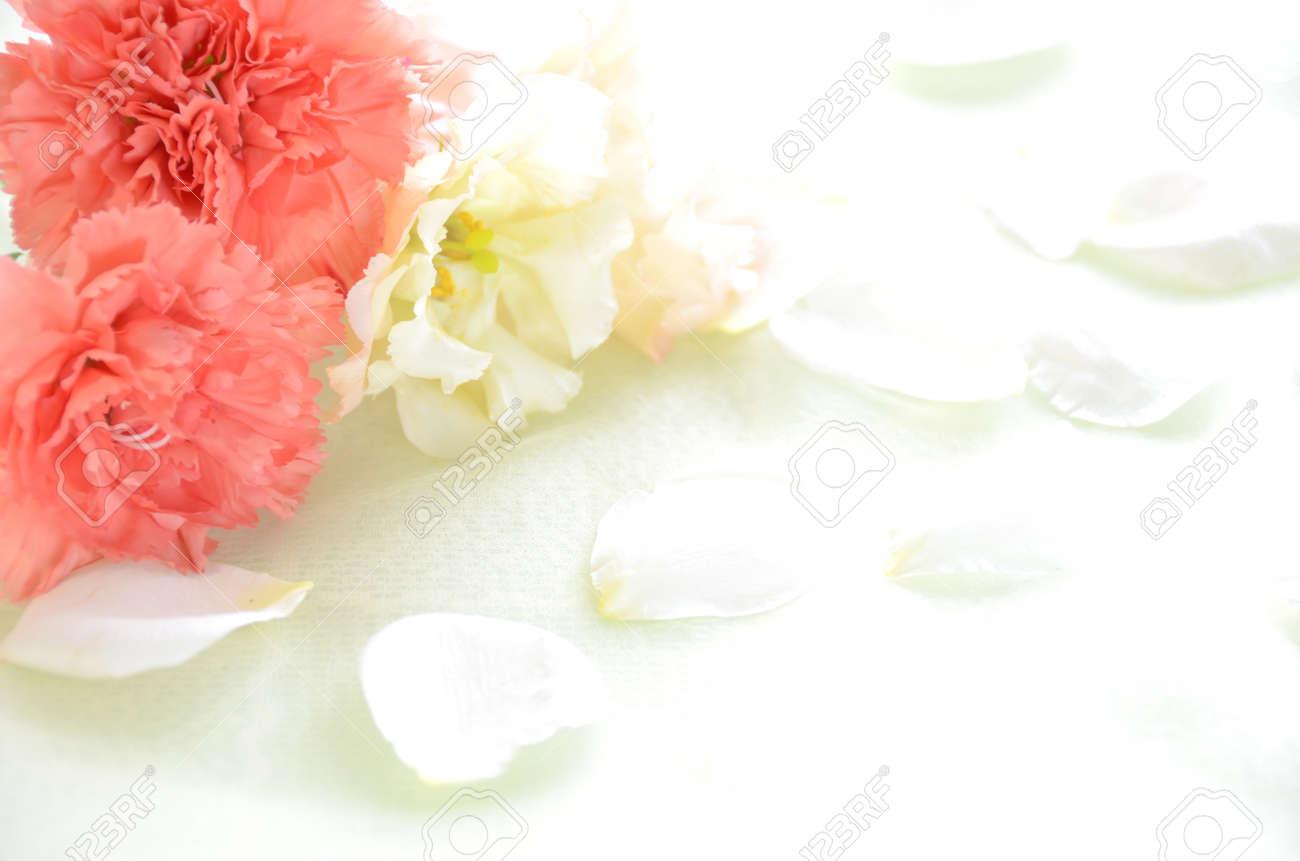 carnation flowers - 27739732