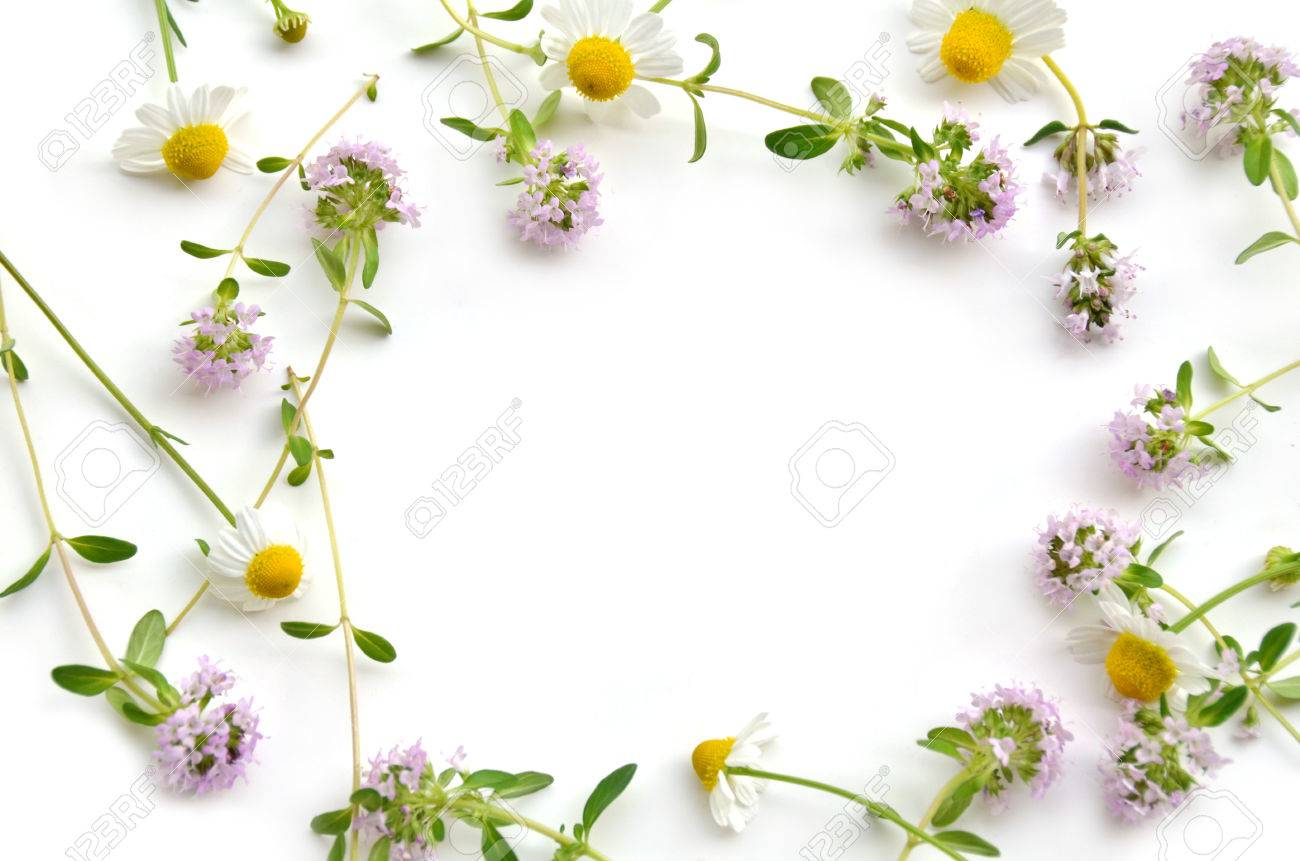 herbal flowers on white background - 28647839
