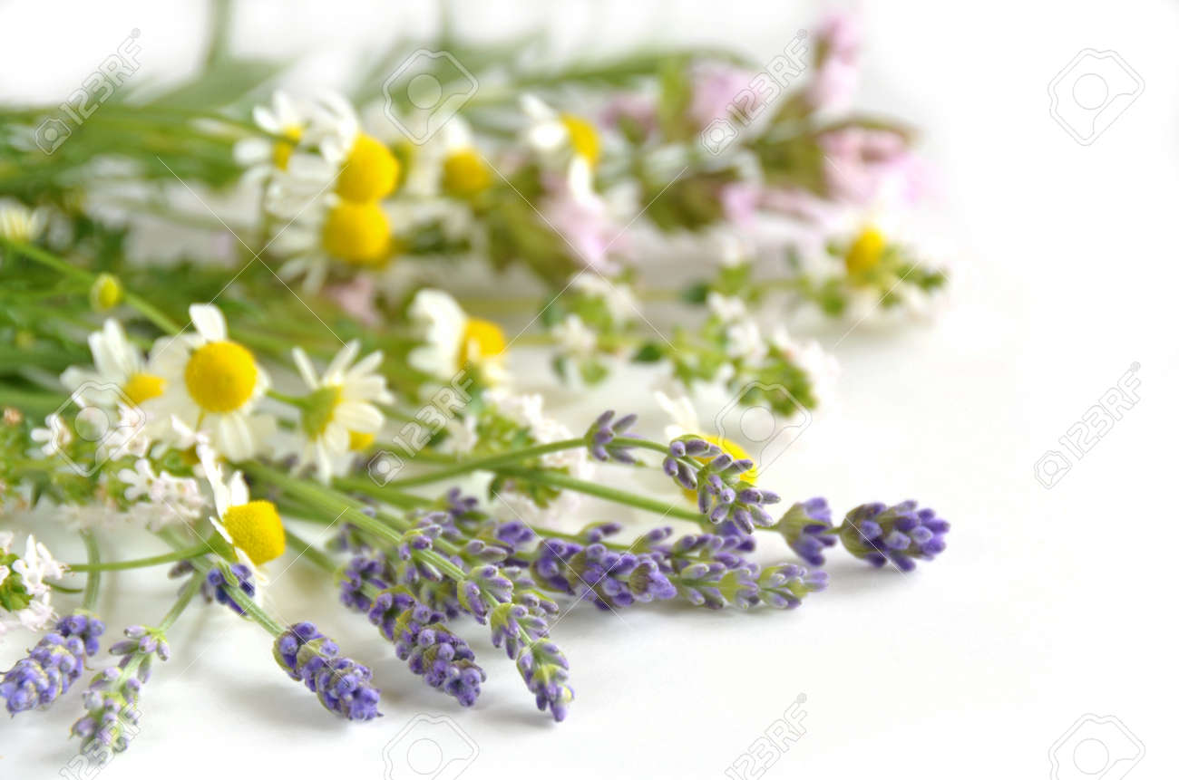 herbs - 29301736