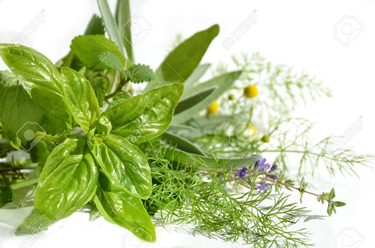 herbs - 29652150