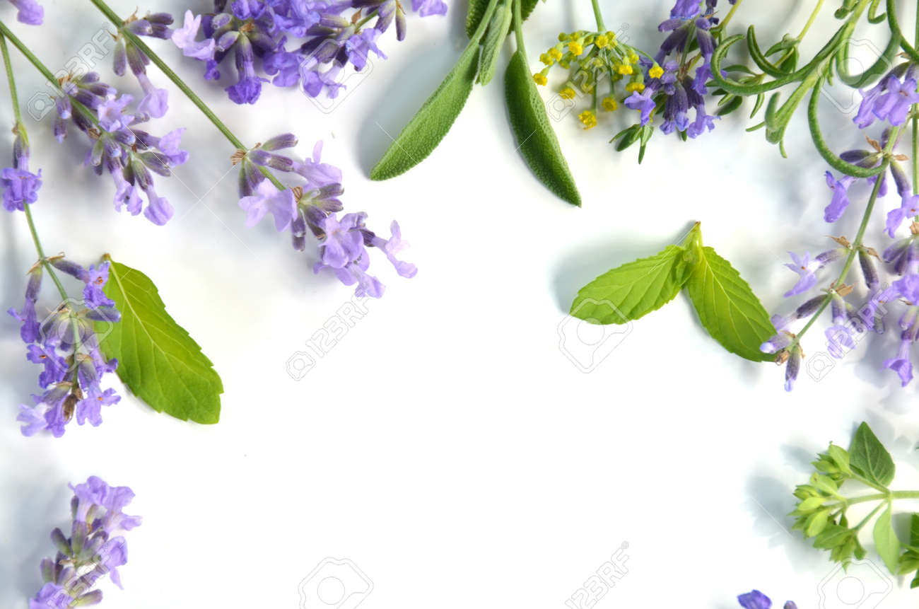 lavender and herbs - 29655586