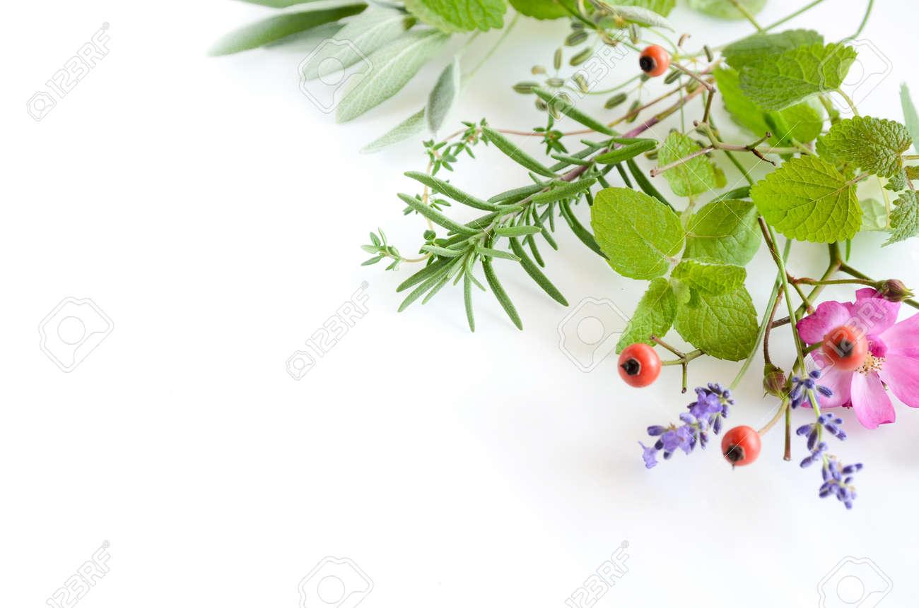 frame of herbs - 49029807