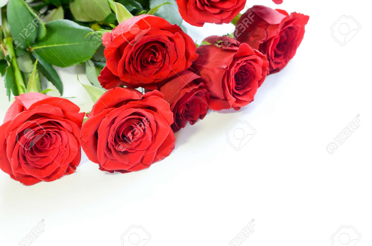 red roses in white background - 58522637