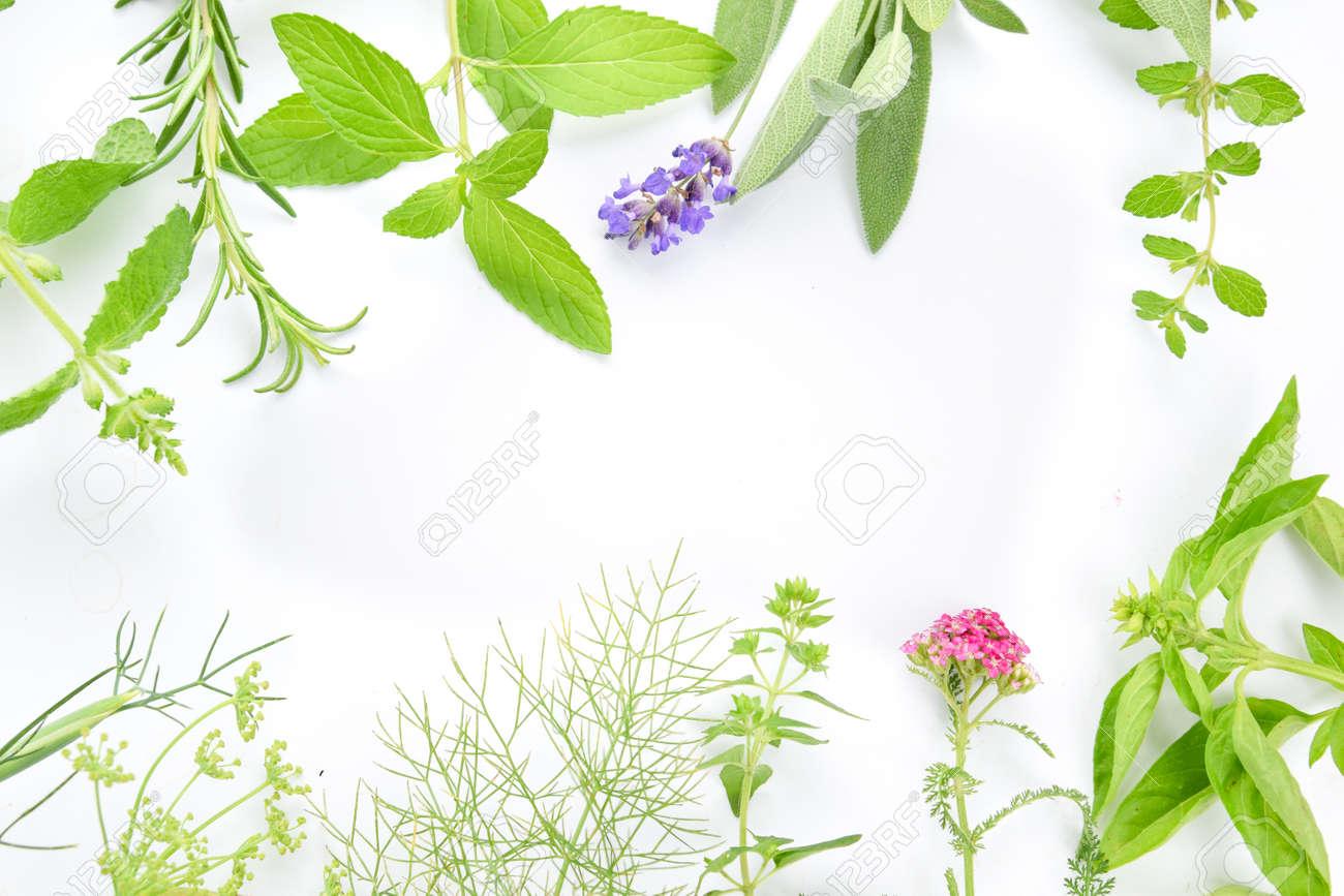frame of herbs - 61305578