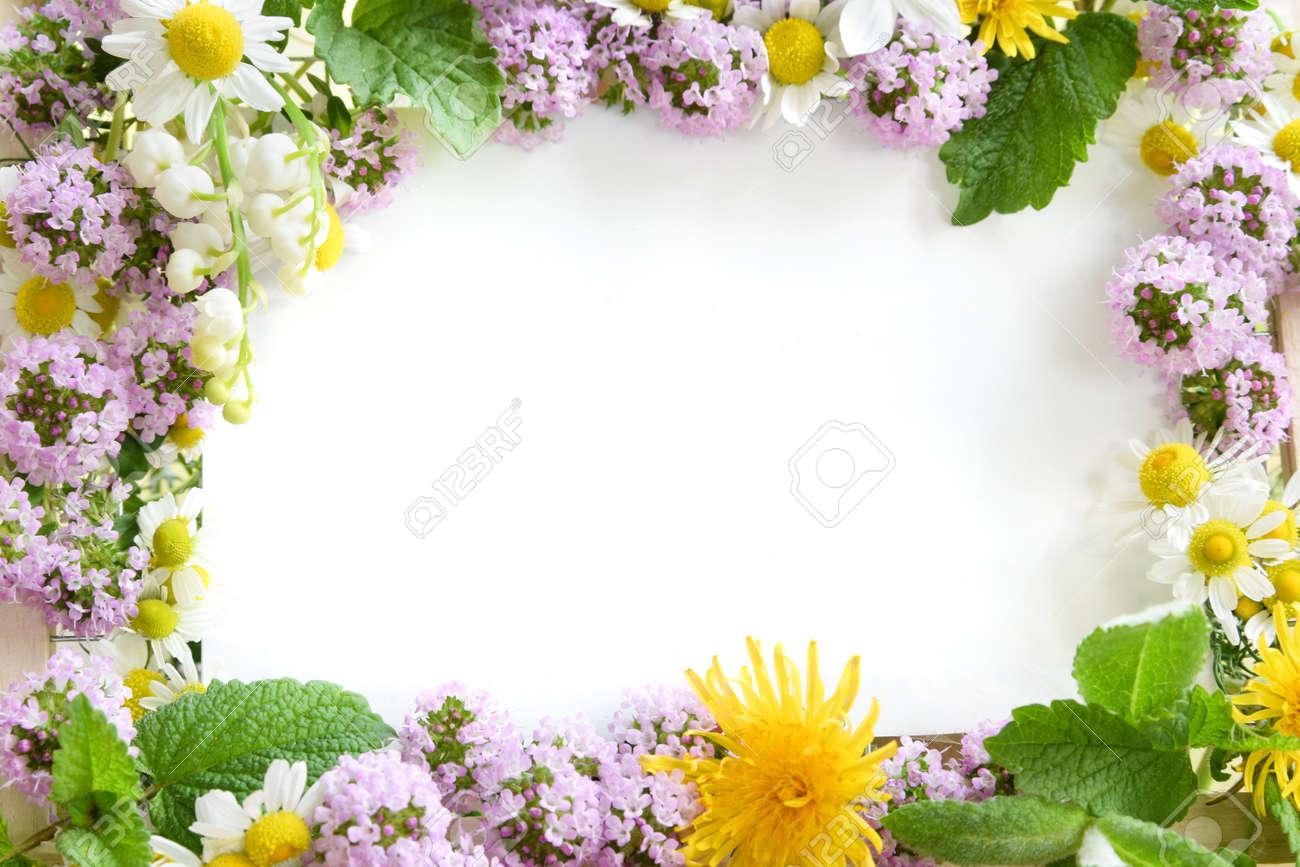 frame of herbal flowers - 64410517