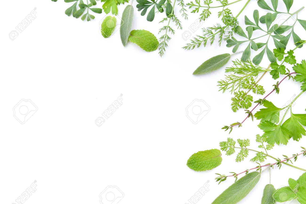 frame of green herbal leaves - 69321274
