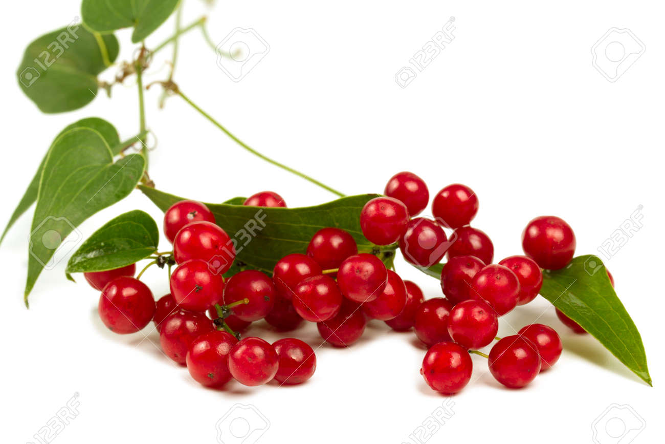 Red berries  isolated on white closeup shot Stock Photo - 17333848