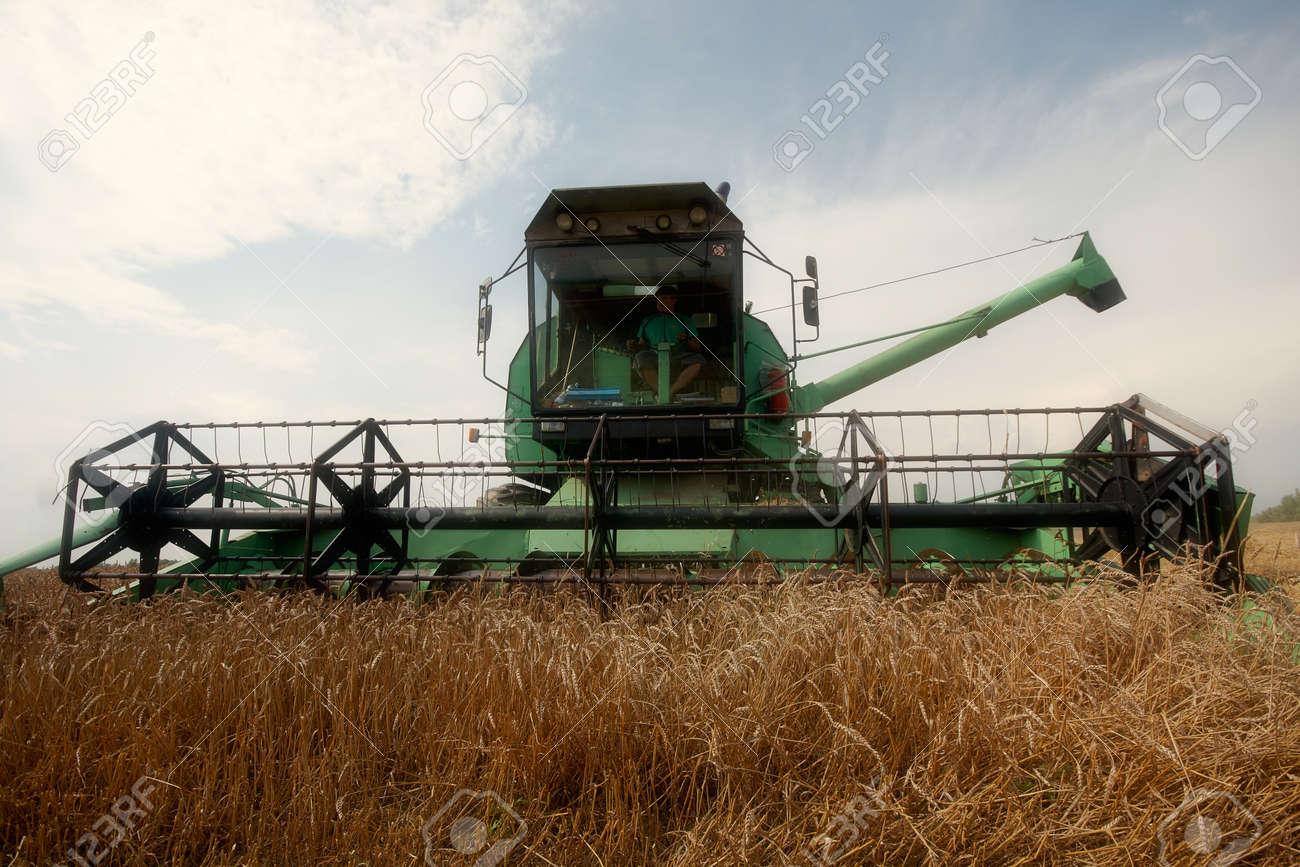 One Combine Harvesting Wheat Stock Photo - 8731048