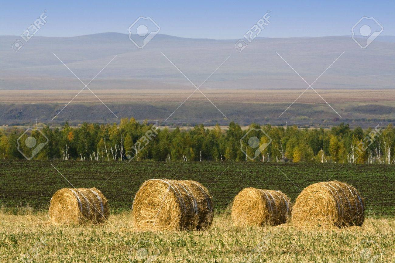 The hay bale in Inner Mongolia grassland in autumn season. Stock Photo - 1936260