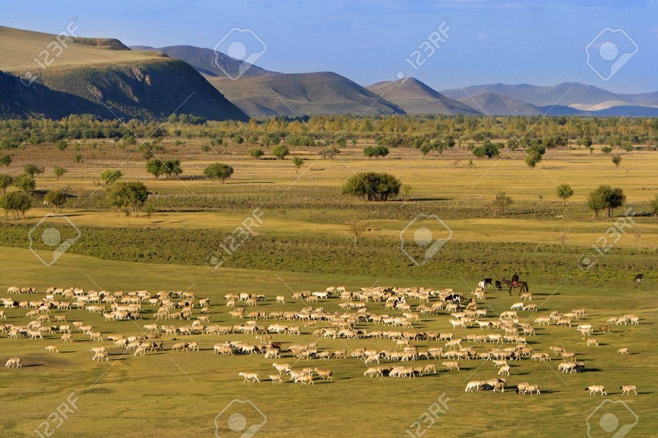 A group of sheep passing through a grassland. Stock Photo - 2241275
