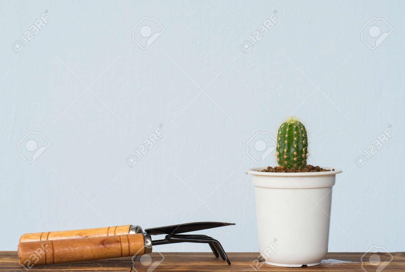Adorable Jardin De Cactus D Interieur Banque D Images Et Photos