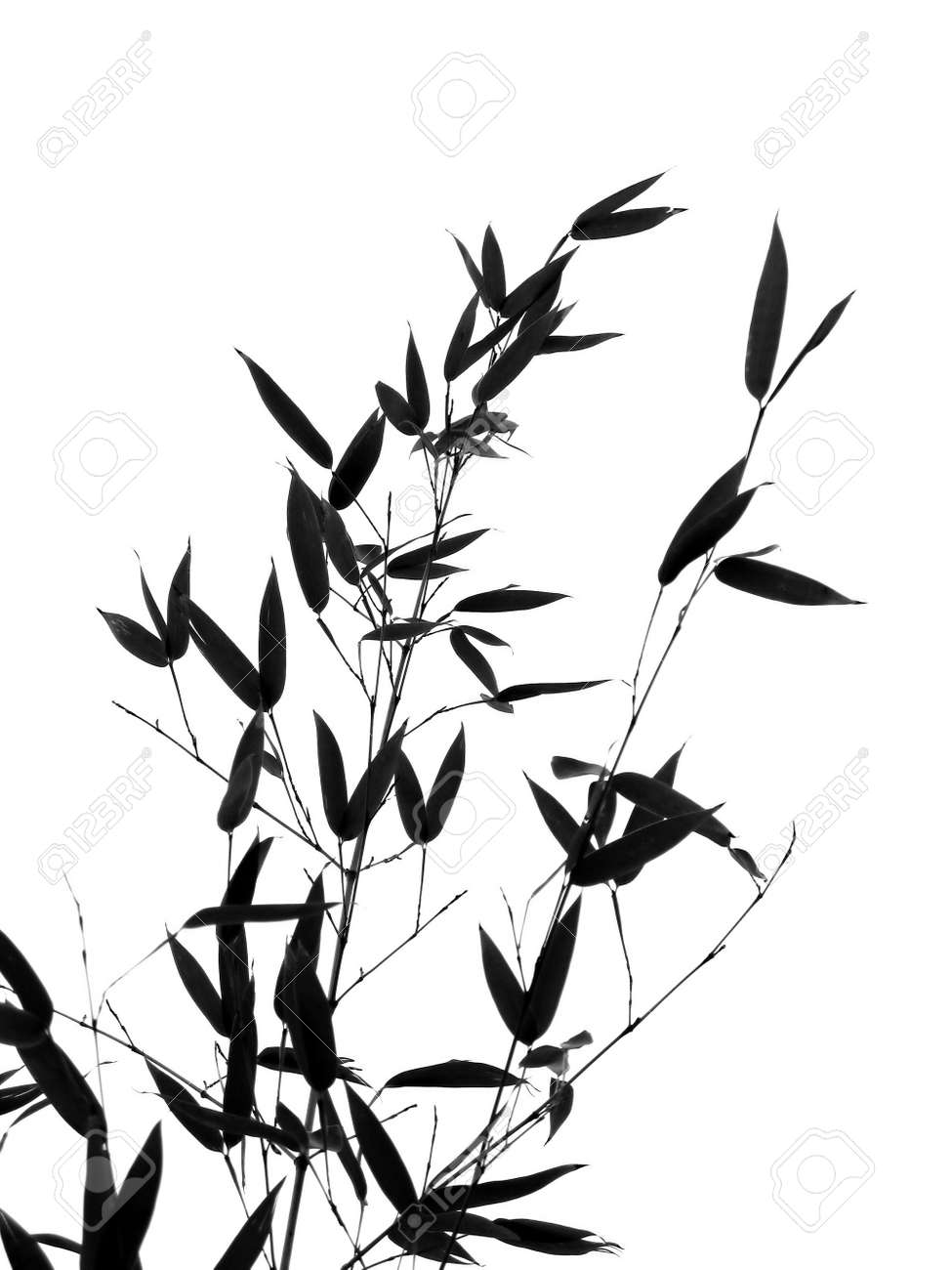 Bamboo Leaves And Branches