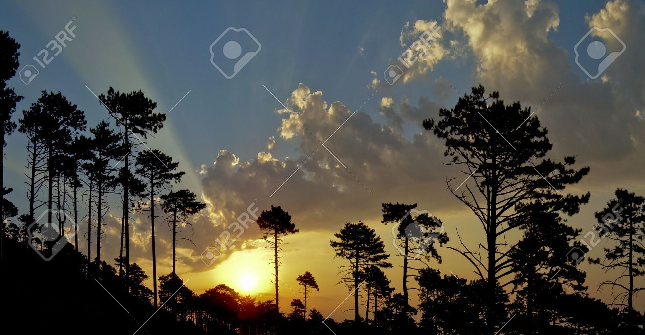 Mountains a dark background a silhouette a tree a rising sun rays of light wood of mountain morning autumn the sky Stock Photo - 3904475