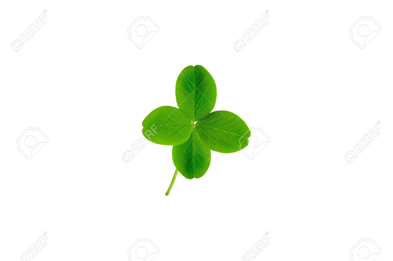 isolated leaf of clover with four petals Stock Photo - 7468061