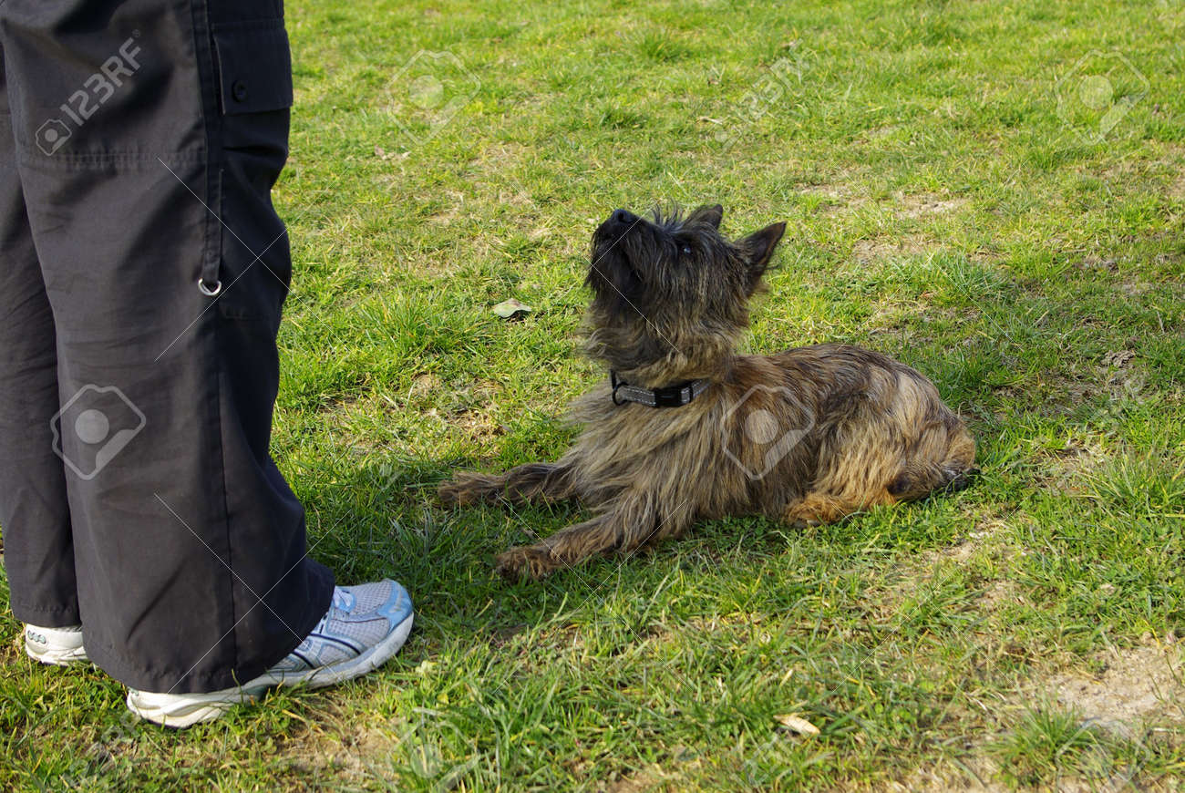 This is a view on a very attentive little dog during exercise Banque d'images - 6436981