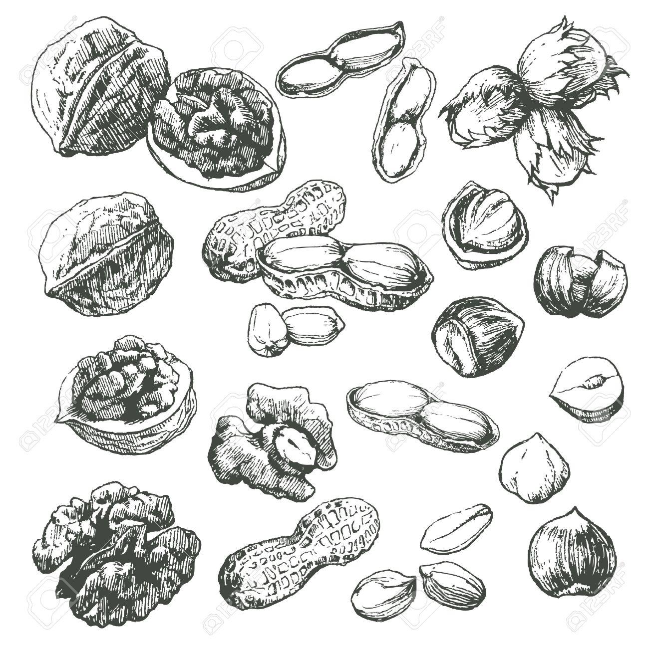Dibujo de frutas secas - Imagui