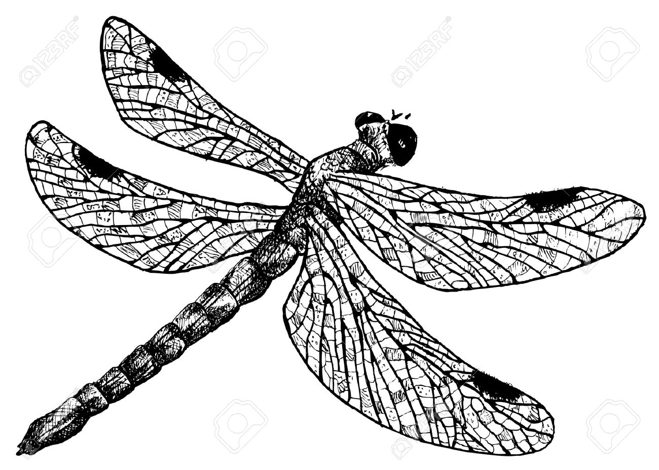 bugs insects pictures stock photos royalty free bugs insects