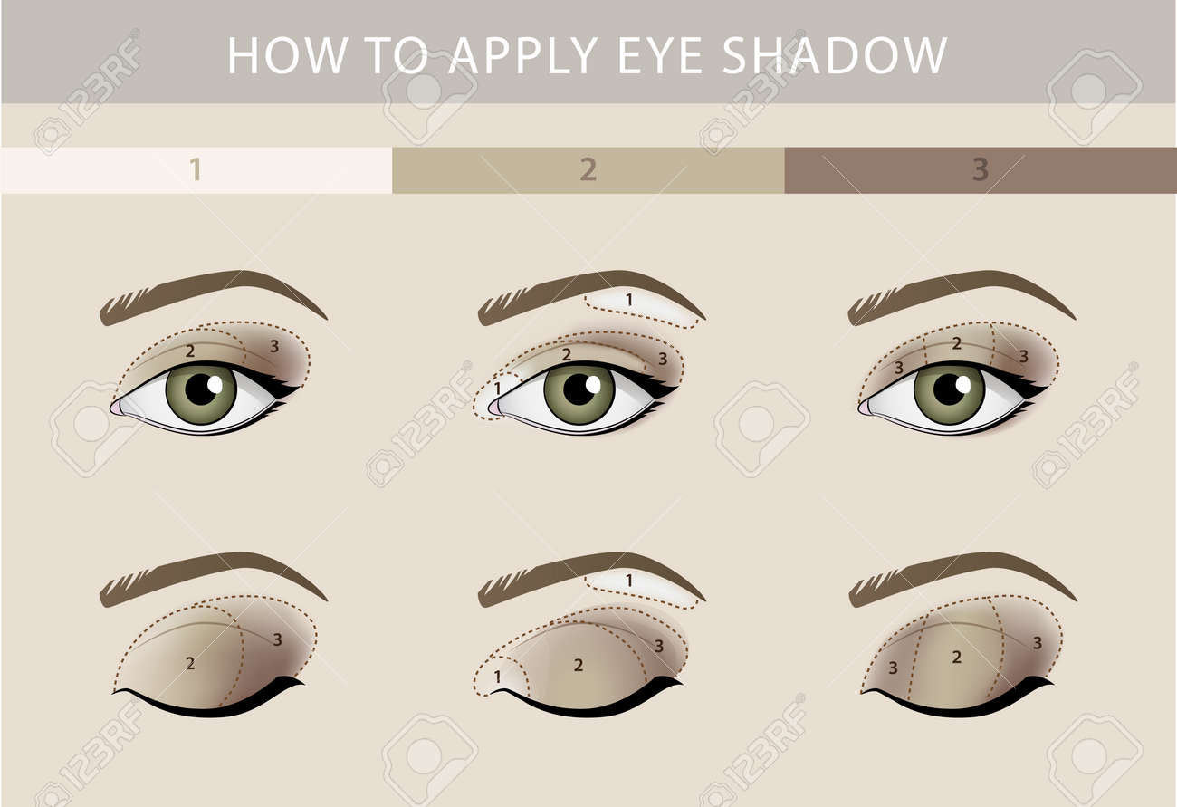 Eye Makeup Types Template Color Beauty Vector Royalty Free Cliparts - Eyeshadow template