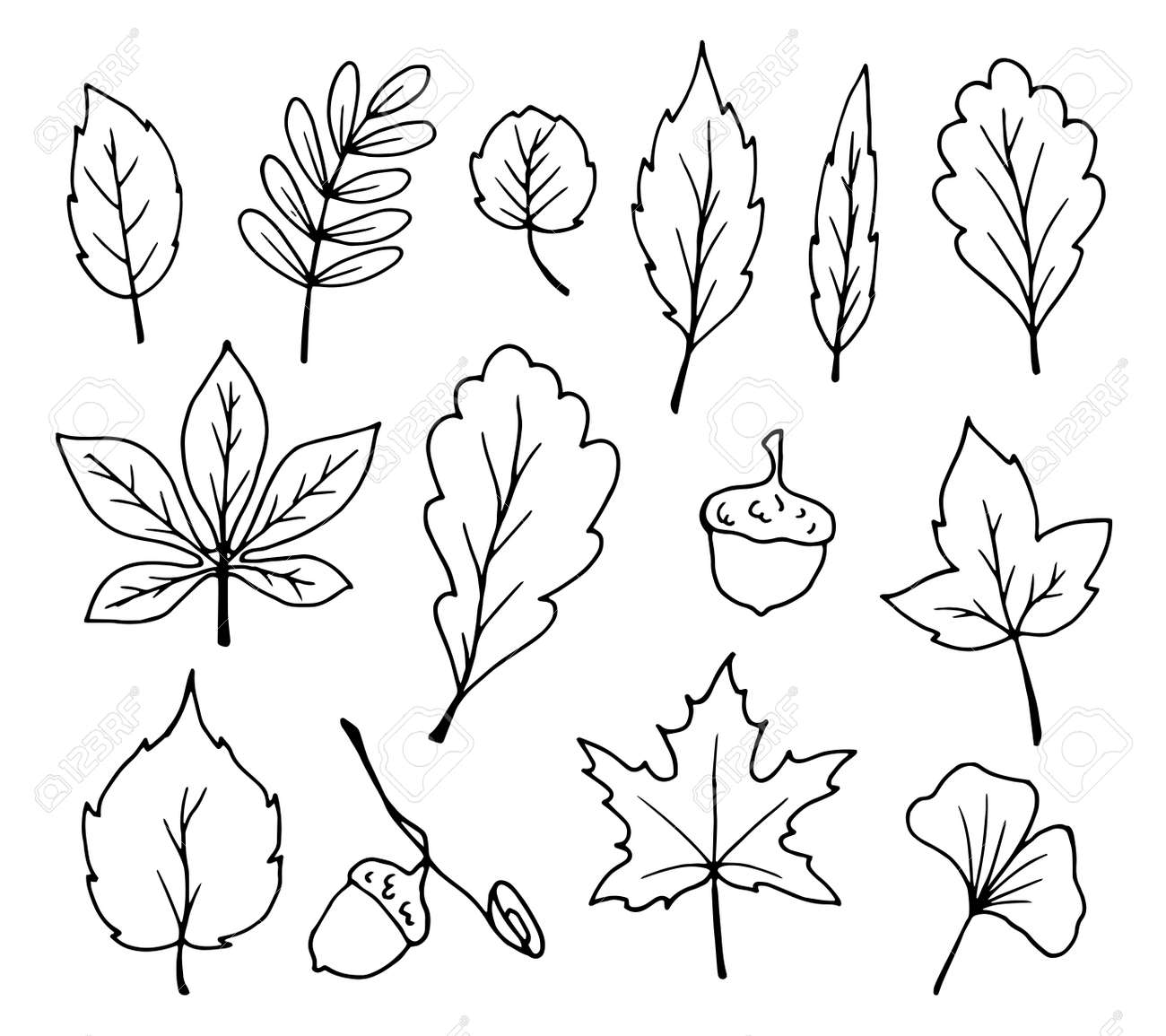 Doodle Leaves Vector Royalty Free Cliparts Vectors And Stock Illustration Image 86139820