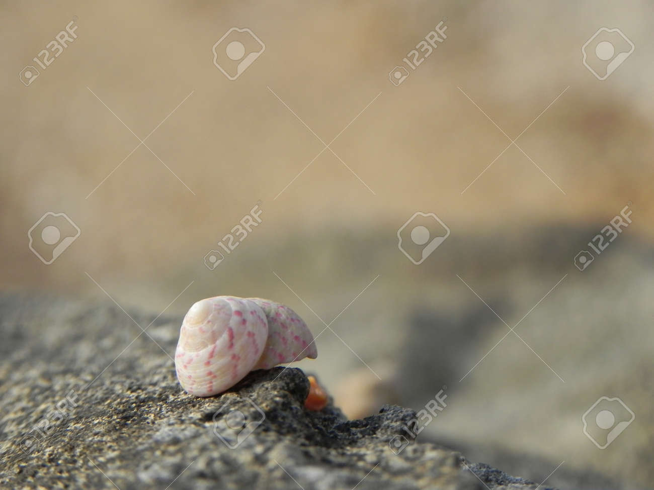 Conchiglia Su Scoglio Sfocato Stock Photo Picture And Royalty Free