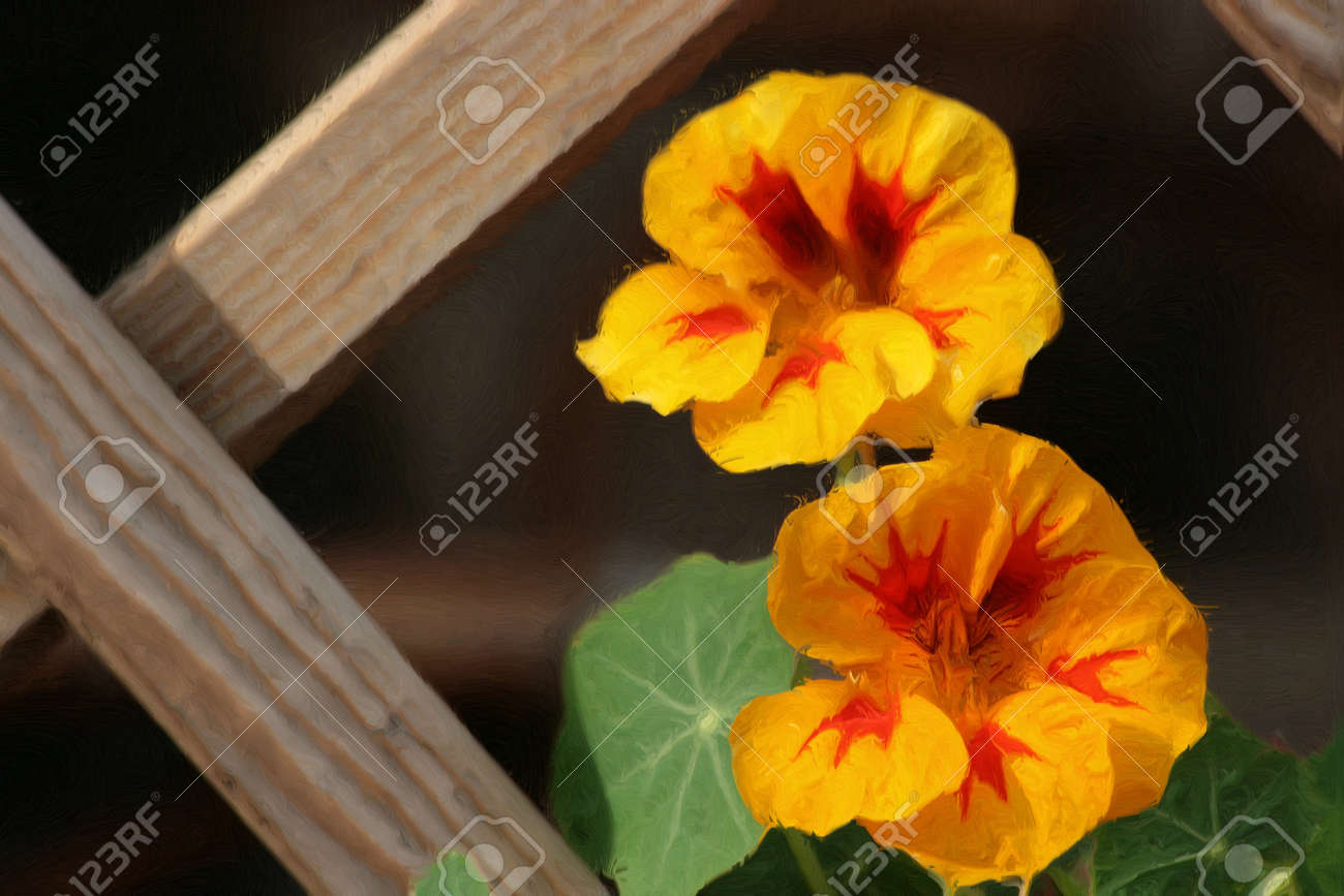 Oil paint with nasturtium flowers. Stock Photo - 8592202