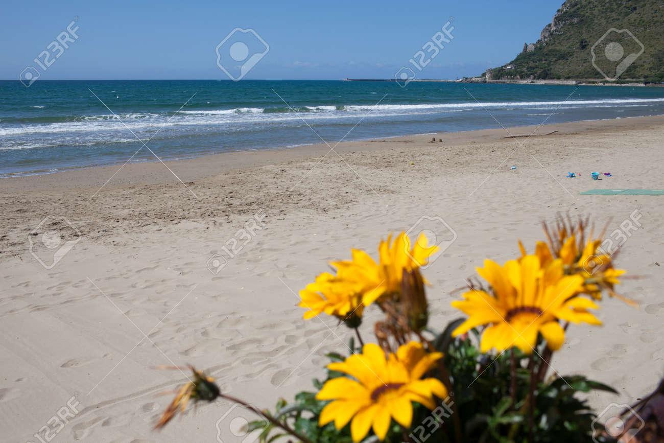 Yellow Gazania Flowers In May At Terracina Beach Lazio Italy