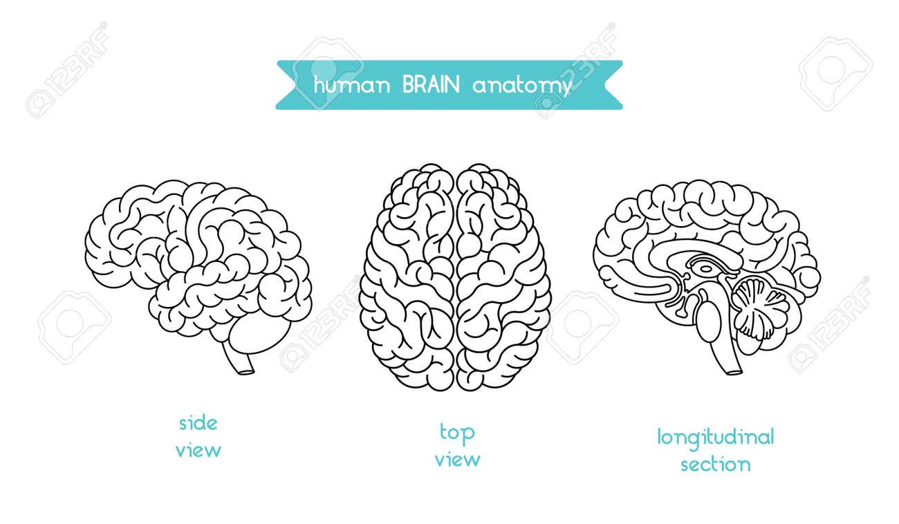Das Menschliche Gehirn-Logo. Vector Logo Des Menschlichen Gehirns ...