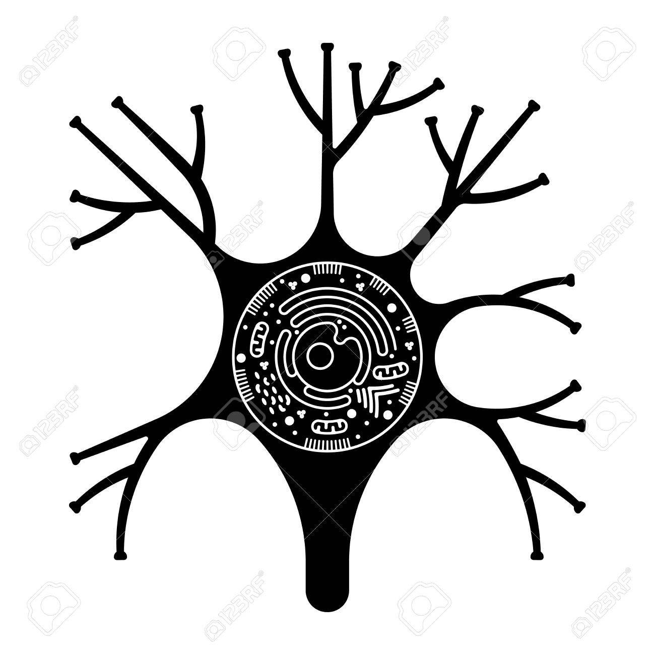 Pictograma Aislado Biología Celular. Anatomía Celular Ilustración De ...