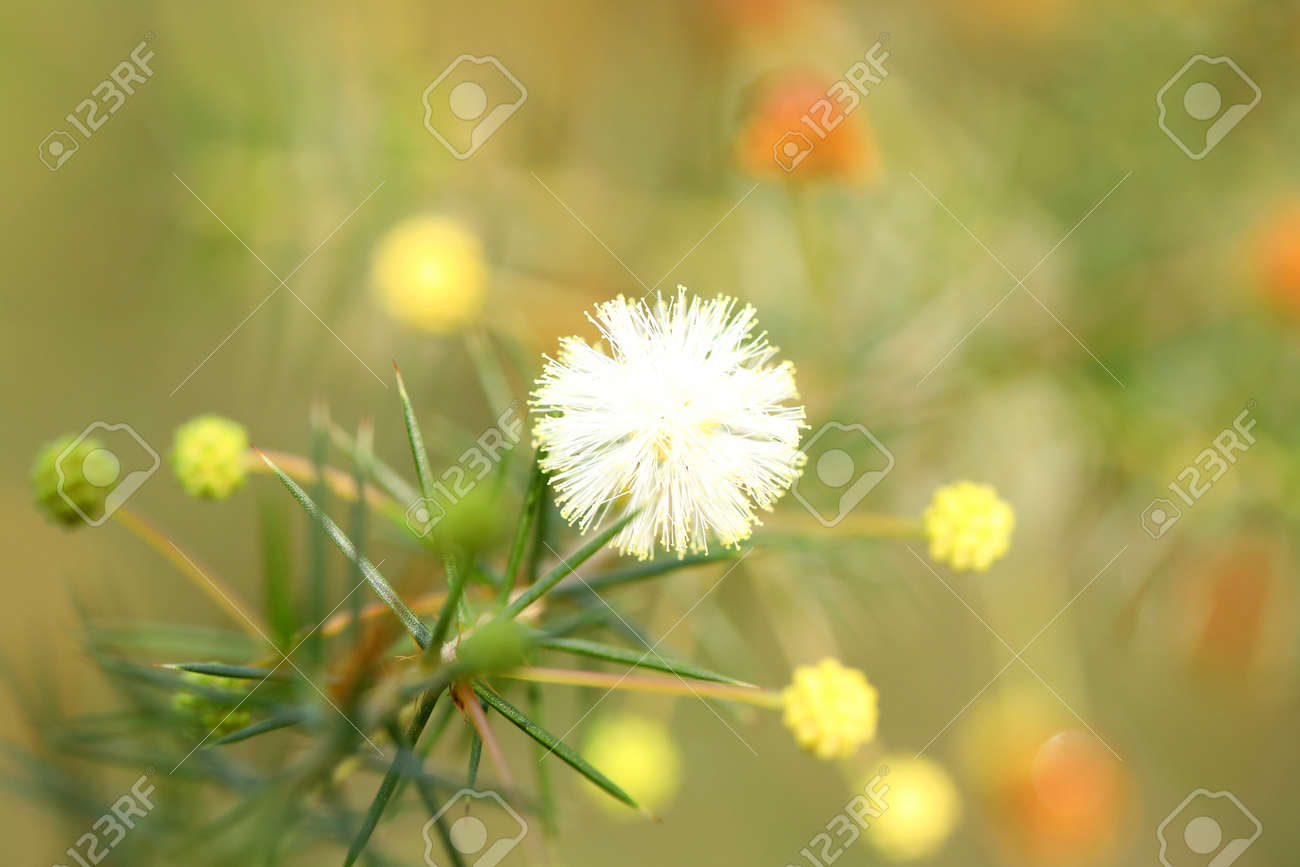 929a36bf6dbb7 gorgeous little clump of cute natural wildflowers in bloom. fragile,..