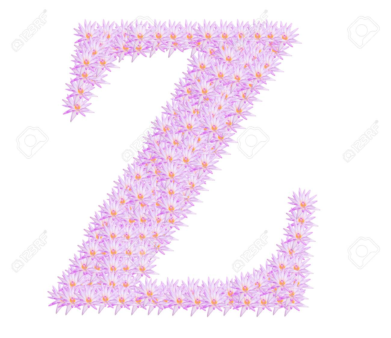 Alphabet Z,Beautiful lotus on a white background