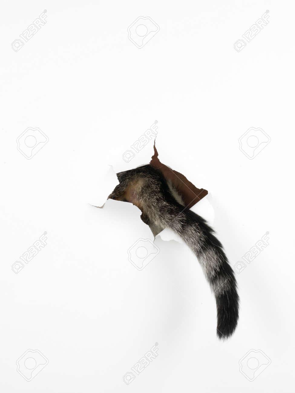 noir filles chatte trou Google Big Black Pussy