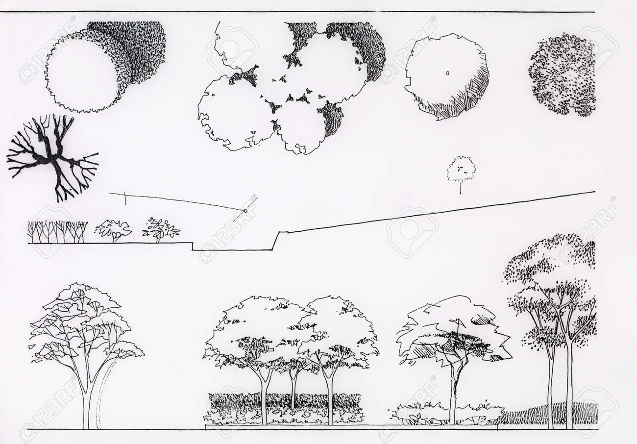 Abstract Artistic Sketch Of Trees, Side And Top View Stock Photo ... for tree drawing top view  193tgx