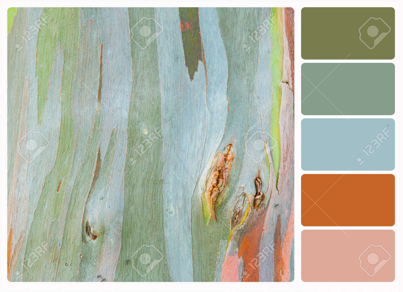Abstract Painting By Eucalyptus Tree Bark , Colour Palette Swatches ...